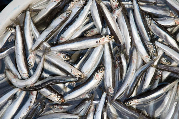 Vị cá cơm tươi thơm ngon trong từng giọt nước mắm CHIN-SU Nam Ngư